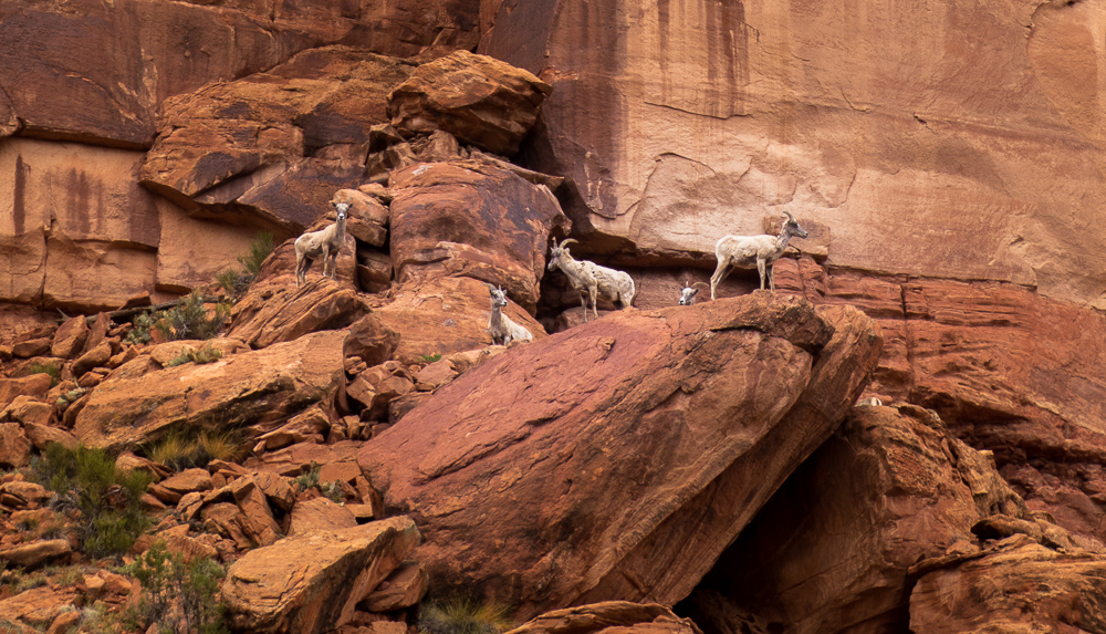 Big Dominguez Canyon: Desert backpacking in Western Colorado
