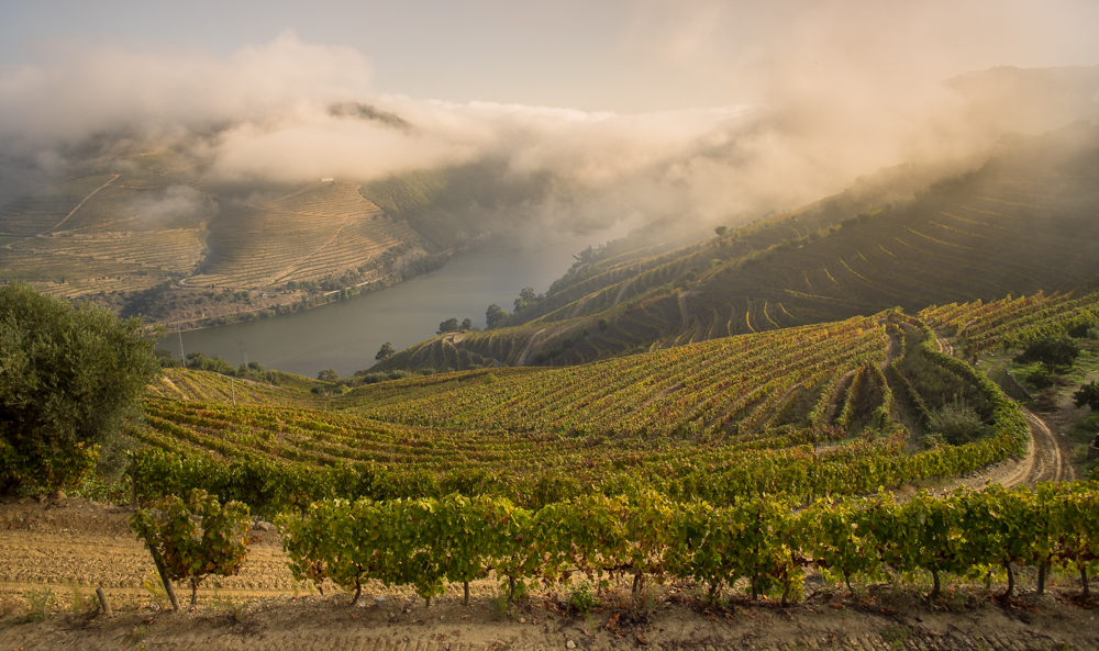Back in time in the Douro Valley