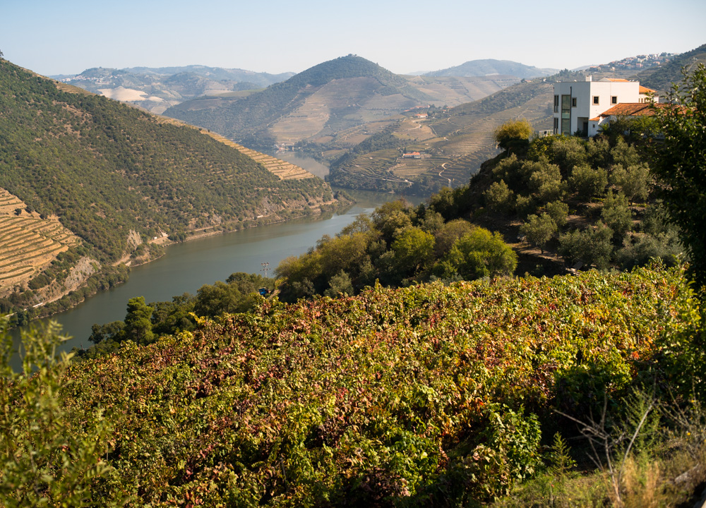 Quintas, Douro River Valley, Portugal