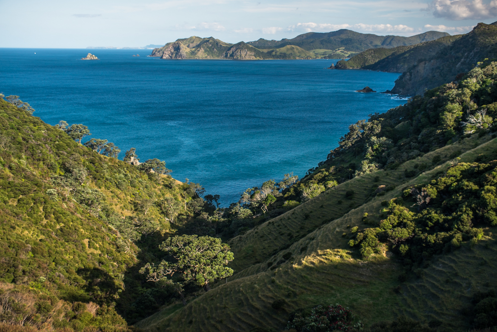 The Coromandel, a wild New Zealand secret