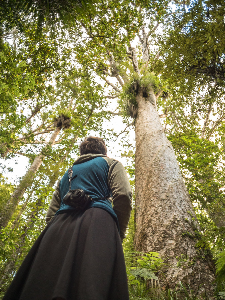 Traunson Kauri Park, New Zealand, Northland