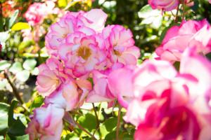New Zealand, Wellington, Botanical Gardens