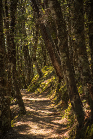 New Zealand, Hiking, Nelson Lakes National Park