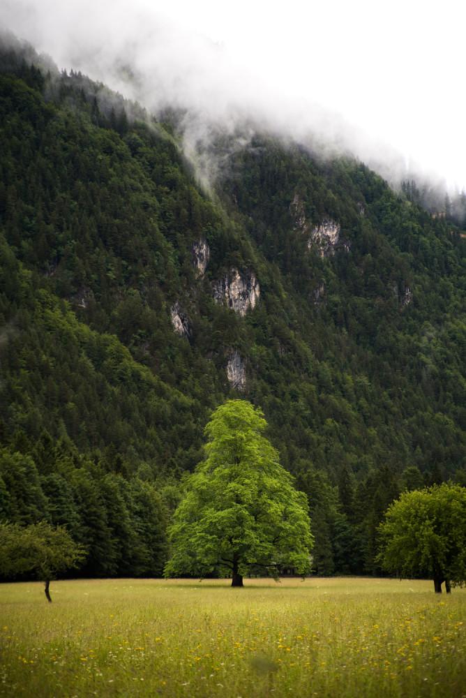 Slovenia, Logarska Dolina, Europe, Alps