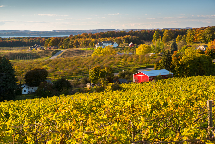 Michigan, Travel, Vineyards
